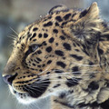 Endangered - world-wildlife-fund photo