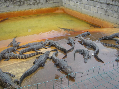 Everglades Gator Farm