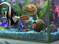 finding-nemo - Finding Nemo wallpaper