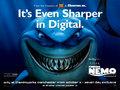 Finding Nemo - pixar photo