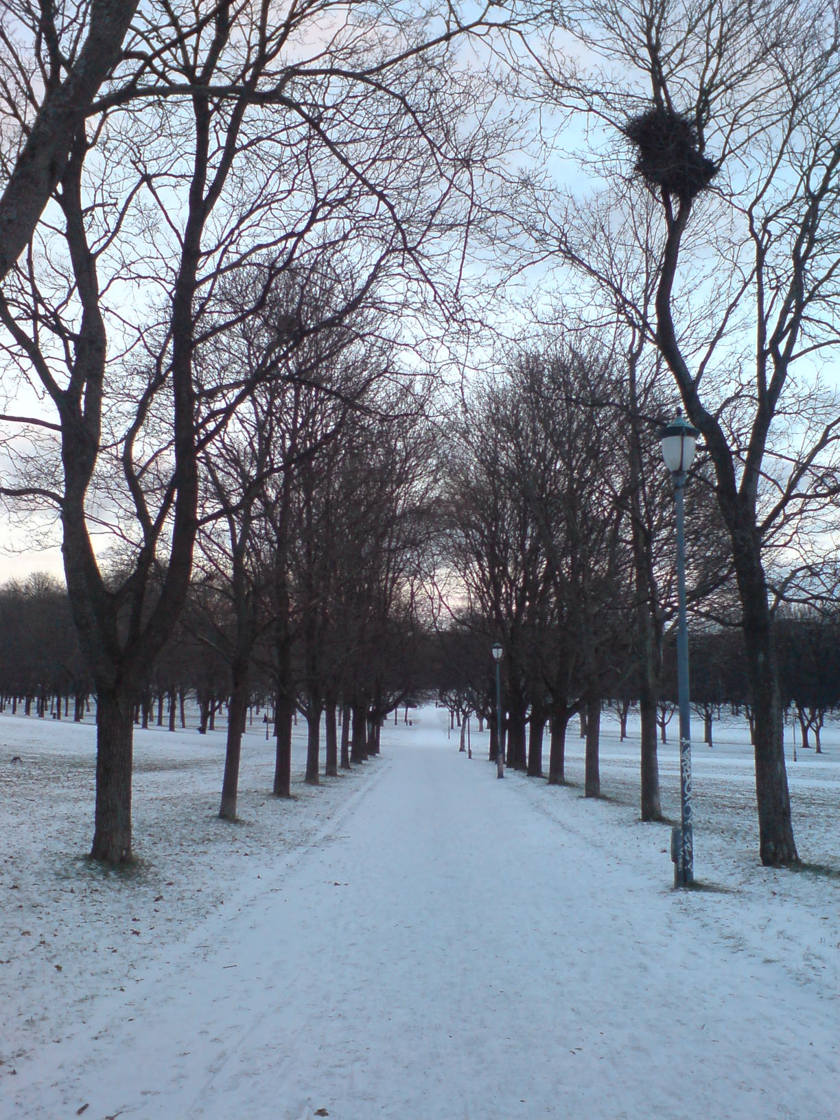 First snow in Oslo - Winter Photo (603766) - Fanpop