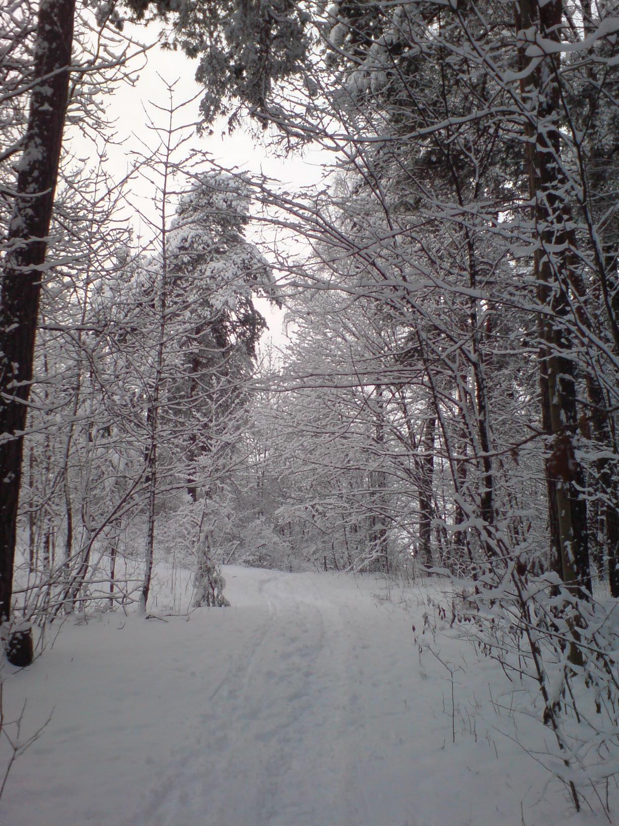 First snow in Oslo - Winter Photo (603768) - Fanpop