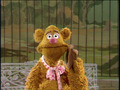 Fozzie Bear - the-muppets photo