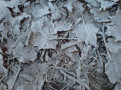 Frost on leaves - winter Wallpaper