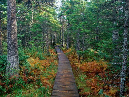 Fundy Natl. Pk., New Brunswick