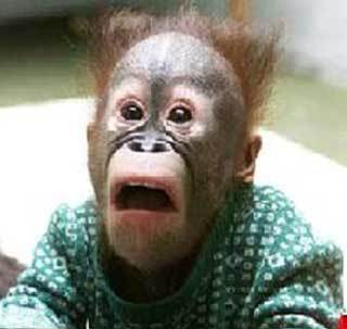 Funny Monkey Faces - the-funpop Photo