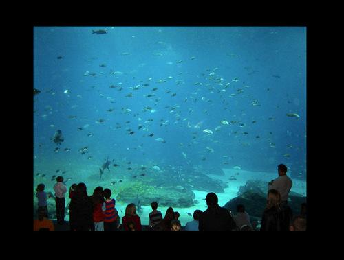 Atlanta fondo de pantalla entitled Georgia Aquarium