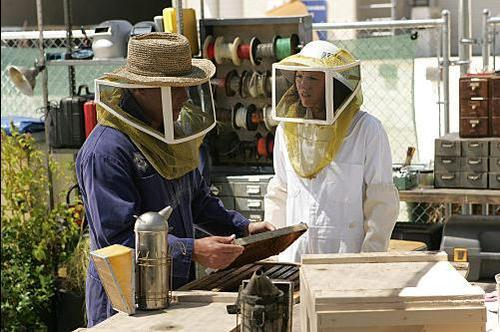 Grissom, Sara and the Bees - csi Photo