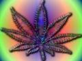 Groovy Weed