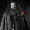Les Employés - Reste 2/2 Hagrid-harry-potter-106418_100_100