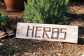 Herbs - herbs photo