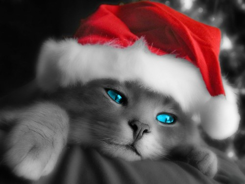 Holiday Kitty wallpaper
