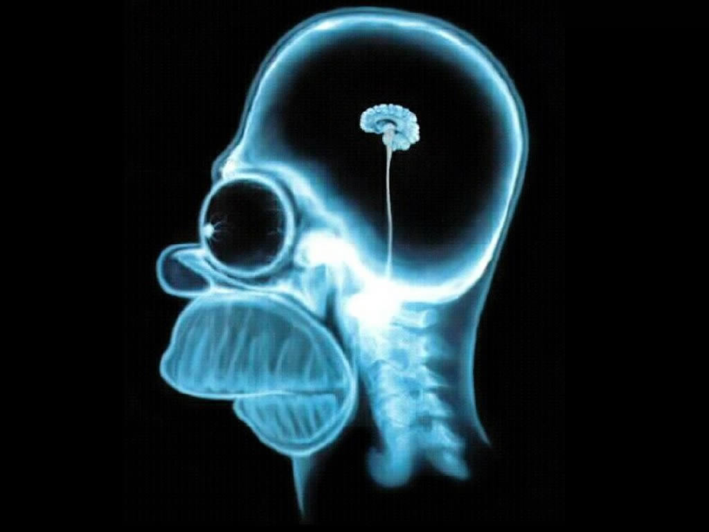 Homer Brain X Ray the simpsons 60337 1024 768