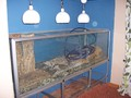 Installing a Wall Aquarium - home-improvement photo
