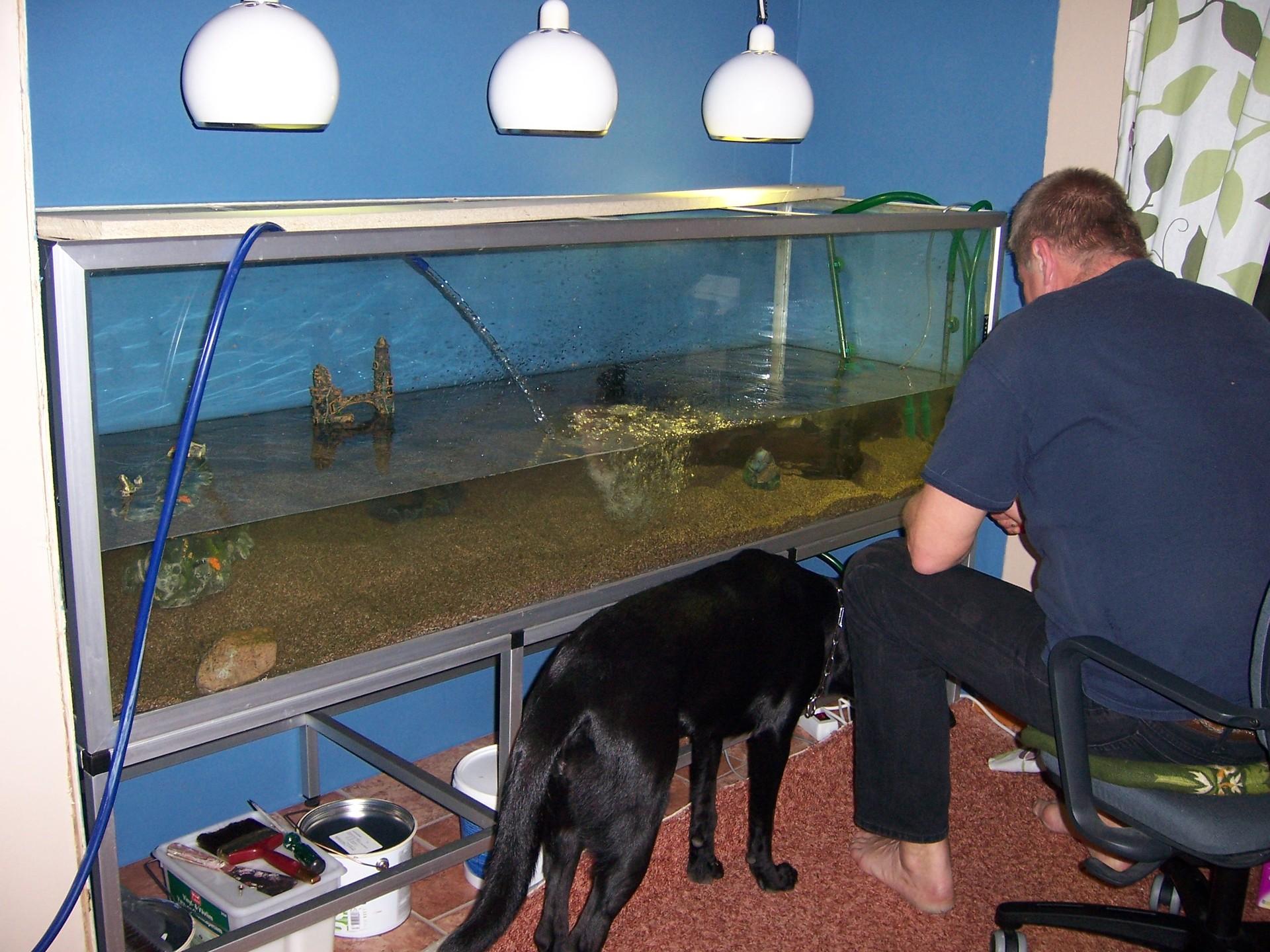 Great Fish Tank Wall Aquarium 1920 x 1440 · 631 kB · jpeg