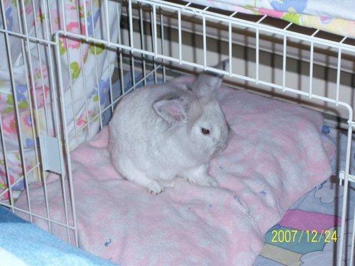 Jake the Rabbit!