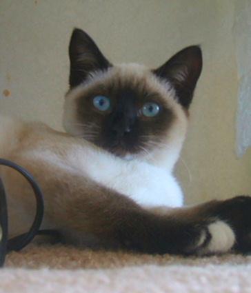 Jamie Cat