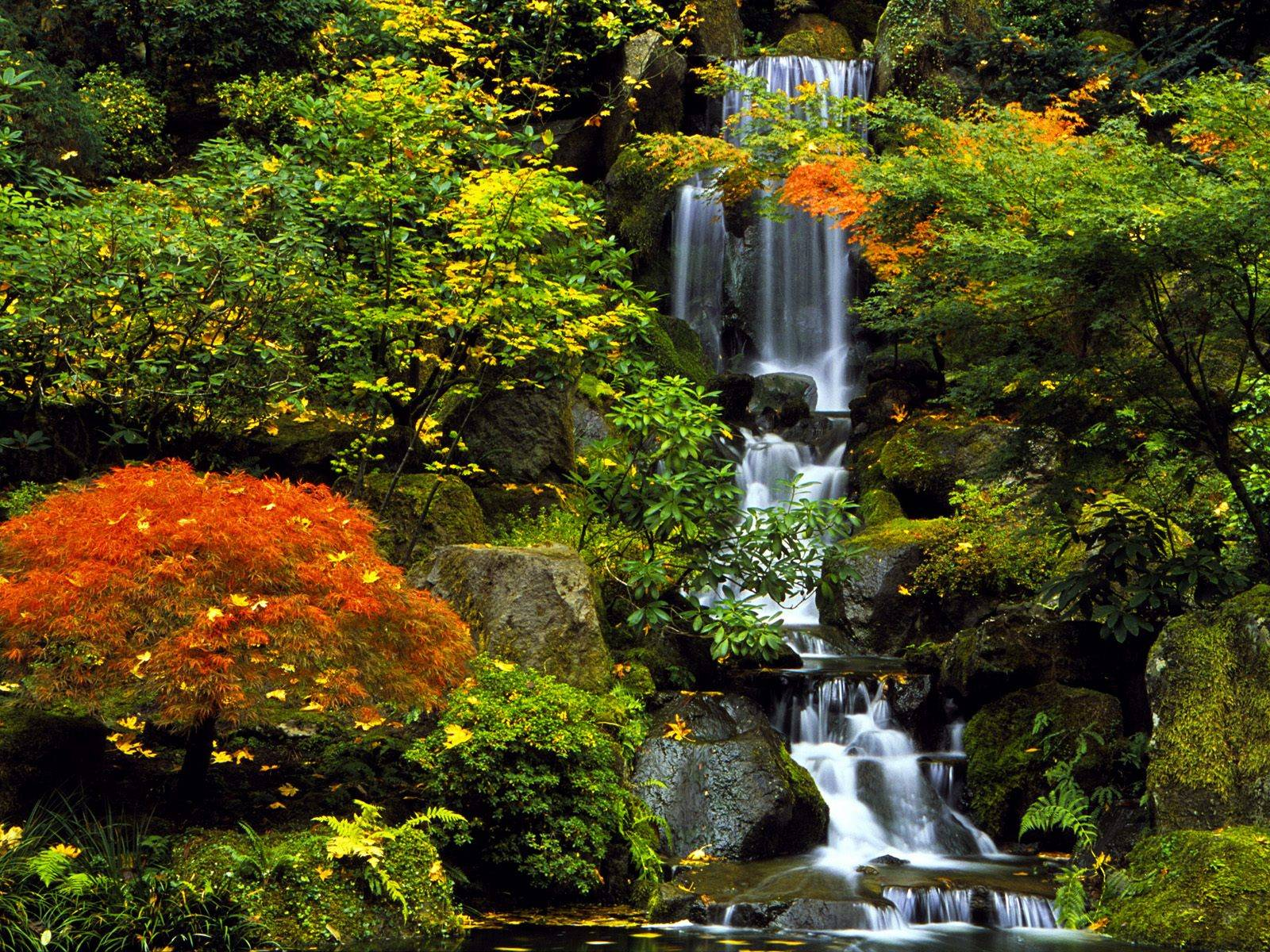 Portland images japanese garden hd wallpaper and background photos 692415 - Japanese garden ...