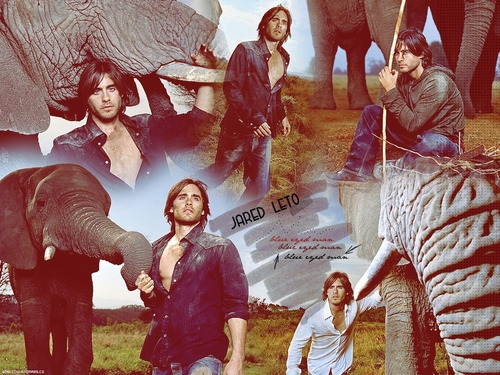 30 Seconds To Mars wallpaper entitled Jared