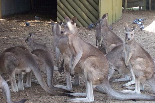 Jirrahlinga Wildlife Rescue