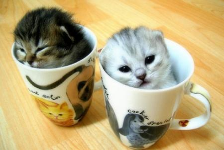 kittens. Kittens In some cups - Animal