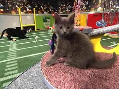 Kitty Halftime