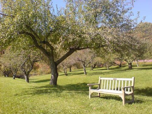 Kripalu Orchard