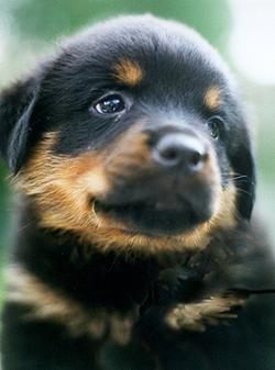 Little Cutie!