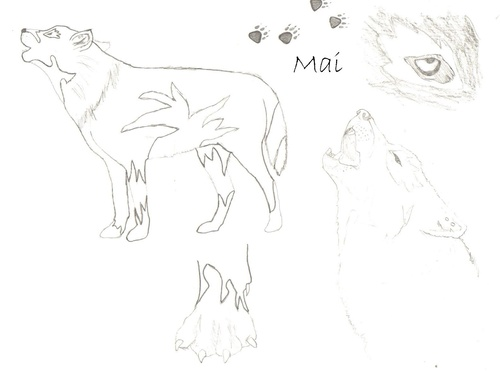 Twilight Series wallpaper entitled Mai=Werewolf=Moi