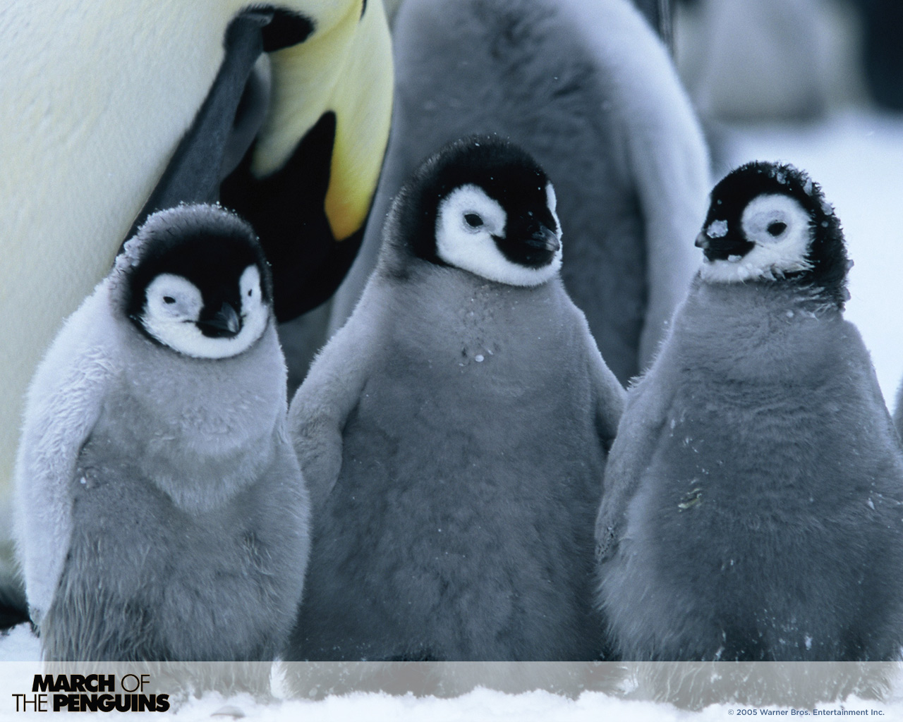March of the Penguins WPs