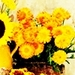 Marigolds - flowers icon