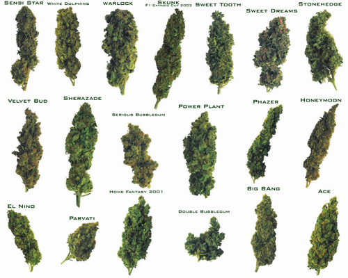 Marijuana images Marijuana wallpaper and background photos