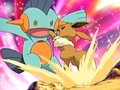 Marshtomp - mudkip-marshtomp-and-swampert photo
