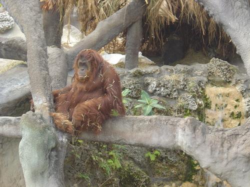 Monkey Jungle - Miami