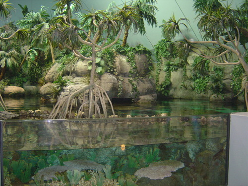 Texas images Moody Gardens in Galveston HD wallpaper and background ...