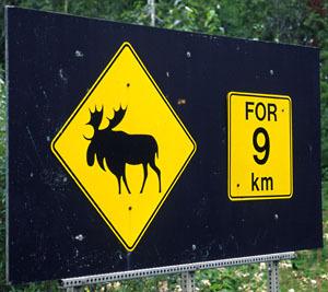 Moose Warning Sign