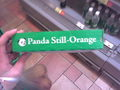 Multicoloured Panda's - viral-videos photo