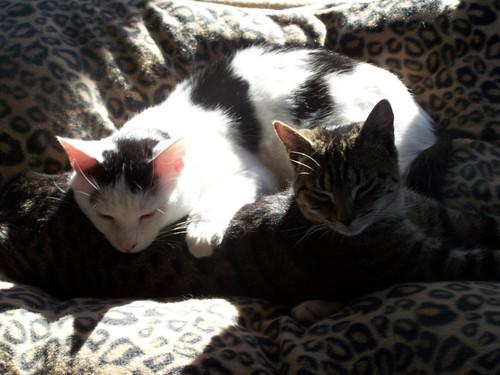 My Rescued Kitties