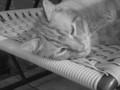 My cat raja! - photography photo
