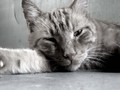 My cat raja! - photography photo