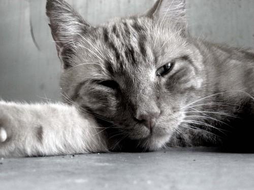 My cat raja!