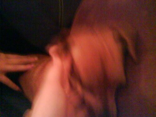My dog бисквит, печенье