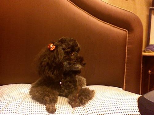 My dog Cookie