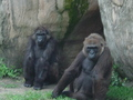 NOLA Zoo - primates photo