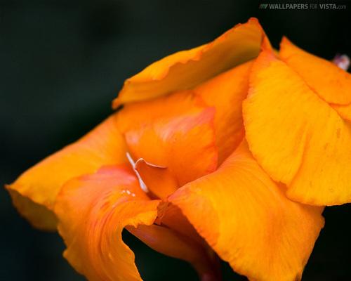 jeruk, orange