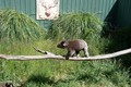 Otway Ranges Wildlife Park