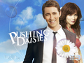 PD Australia - pushing-daisies wallpaper