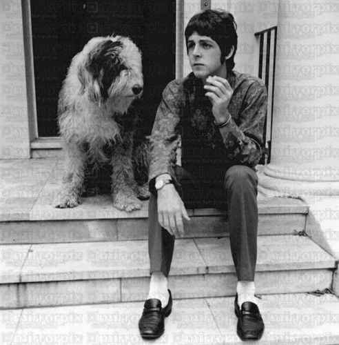 Paul McCartney kertas dinding titled Paul and Martha