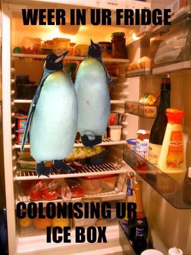 Penguin  - lolcats