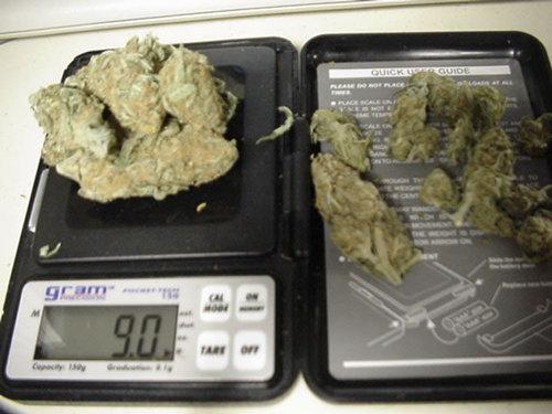 Plants & Buds